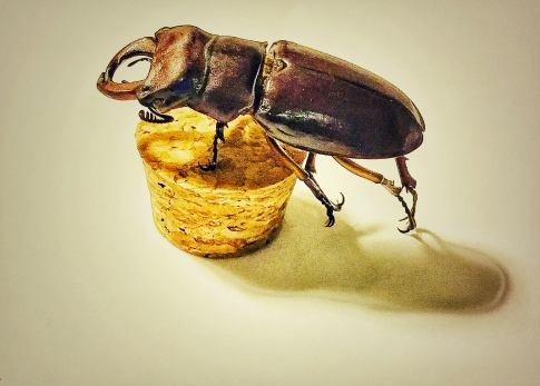 stag beetle2